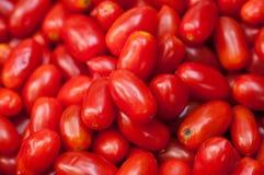 Seeda-Tomate Stockfoto