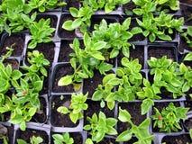 Seedbed Photos libres de droits