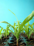 Seedbed Stock Photo