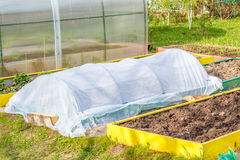 Seedbed on the Household plot. Vegetable garden. Dacha.  Russia Stock Photography