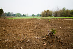 Seedbed preparation Stock Images