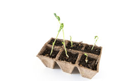 Seedbed on white background Royalty Free Stock Photo