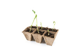 Seedbed on white background Stock Photography