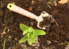 Seedbed z łopaty rośliny flancami zamyka w górę fotografii Obrazy Royalty Free