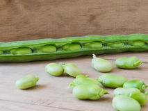 Seedcase lima beans. Stock Images