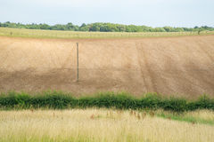 A seeded lavender field. At summertime, UK Royalty Free Stock Photography