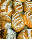 Seeded spelt loaves with honey. Close up of seeded spelt bread loaves freshly out of the oven. Spelt loaf with honey, sunflower seeds and Lupin seeds Royalty Free Stock Photography