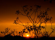 Seedheads at sunset. Cow parsley seedheads silhouetted by sunset Stock Photography
