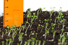 Seeding. Royalty Free Stock Images