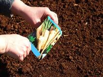Seeding Stock Image