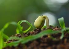 seeding Royalty-vrije Stock Foto's