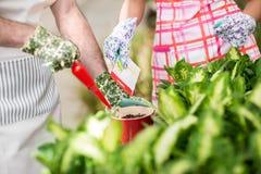 Seeding flowers in a flowerpot. Royalty Free Stock Photos