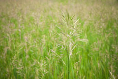 Seeding Grass Royalty Free Stock Photography