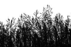 Seeding Grass Stock Photography