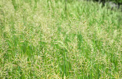 Seeding Grass royalty free stock images