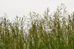 Seeding Grass Royalty Free Stock Image