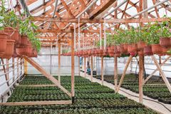 Seeding in greenhouse. seeding plants greenhouse. seeding in greenhouse concept. plant seedling in greenhouse. new life.  royalty free stock photography