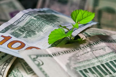 Seeding growing from money. investment Royalty Free Stock Image