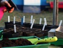 Seeding Humidify Royalty Free Stock Photography