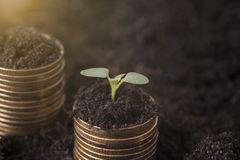 Seeding Plant seed growing on pile of coins money. Stock Photos