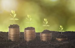 Seeding Plant seed growing on pile of coins money. Royalty Free Stock Photos