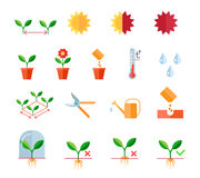 Seeding and planting instructions steps, pruning Stock Image
