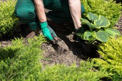 Seeding plants in the garden Royalty Free Stock Photo