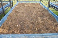 Seeding tray Stock Photography