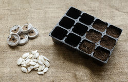 Seeding tray royalty free stock images