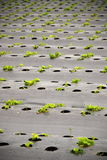 Seeding yard Royalty Free Stock Photos