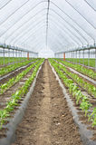 Seedings in greenhouse Stock Photos