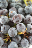 Seedless Coronation Grapes Stock Image