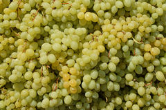 Seedless grapes background Stock Photo