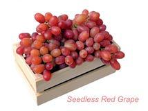Seedless röda druvor royaltyfri fotografi