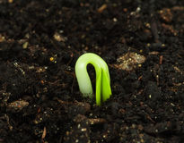 Seedling Stock Photos