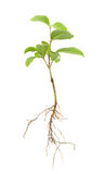 Seedling Stock Image