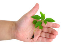 Seedling Stock Images