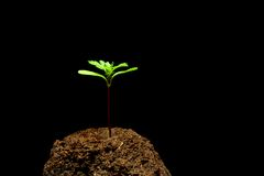 Seedling Royalty Free Stock Photo