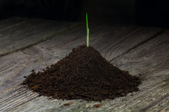 seedling Imagens de Stock Royalty Free