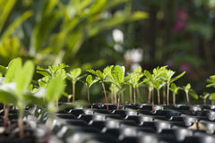 seedling Imagens de Stock