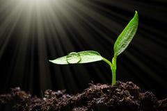 Free Seedling Stock Photo - 74606980