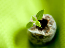 Seedling. Detail of a small seedling royalty free stock image