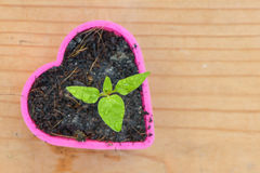 Seedling chili in heart. Seedling chili in plasatic heart Royalty Free Stock Photography