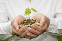 Seedling in coins Royalty Free Stock Photo