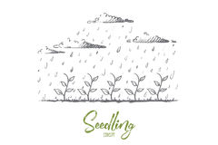 Seedling concept. Hand drawn isolated vector. Stock Photos