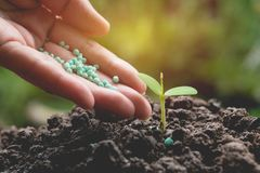 Seedling concept by human hand apply fertilizer young tree Stock Photography