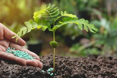 Seedling concept by human hand apply fertilizer young tree Stock Image