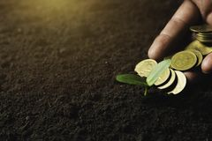 Seedling concept by human hand holding money coins with young tree on nature background stock images