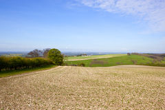 Seedling crops and the vale of york. A view of the vale of york from a field with chalky soil and a young bean crop with hills and hedgerows inder a blue cloudy Stock Images