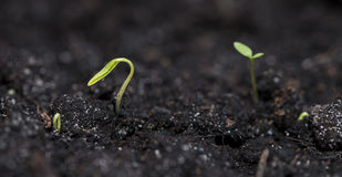 Seedling on dark background. Small seedling on dark background Royalty Free Stock Images